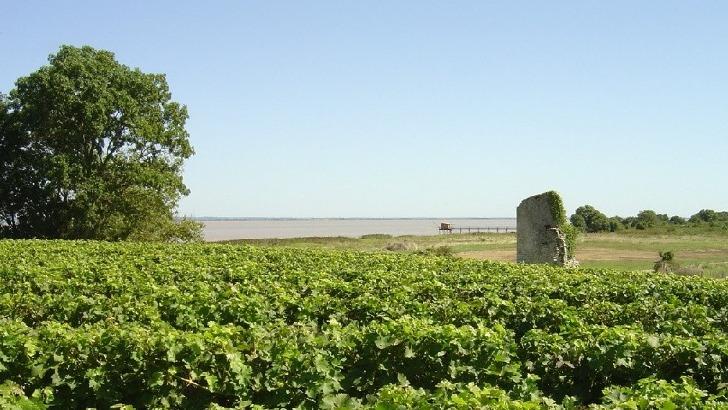 chateau-tour-castillon-protege-ses-vignes-a-travers-une-lutte-raisonnee