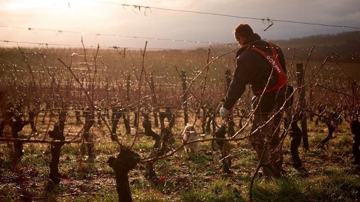 vignerons-de-buzet-des-pratiques-respectueuses-de-environnement-et-de-sante-du-consommateur