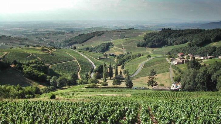 un-sublime-terroir-pour-produire-meilleurs-vin
