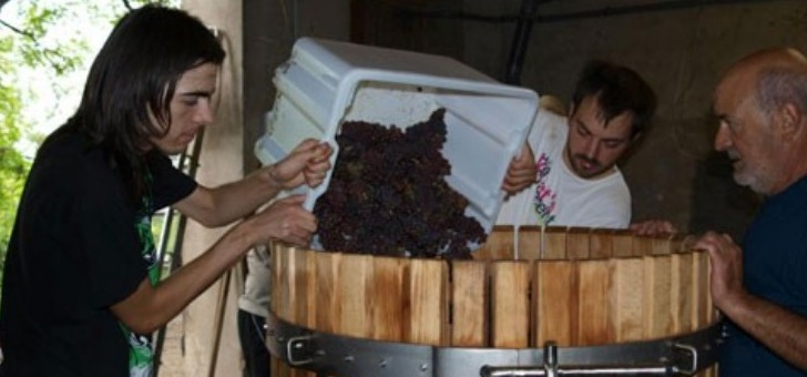 debut-du-processus-de-vinification