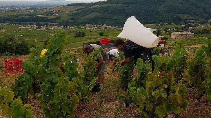 vignes-sont-travaillees-manuellement-aux-sourc