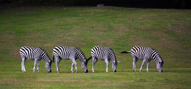 parc-zoologique-de-thoiry-a-thoiry-a-decouverte-de-faune-sauvage