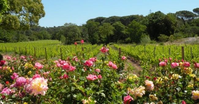 vins-alcools-domaine-le-clos-des-roses-a-frejus