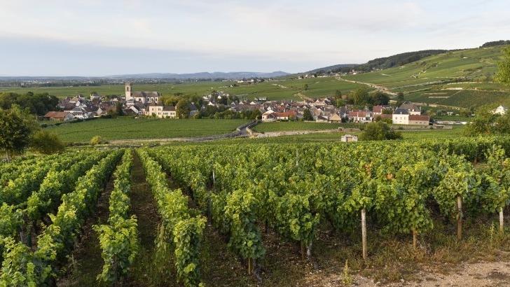 village-de-pommard-au-coeur-des-vignobles-de-bourgogne-classes-au-patrimoine-mondial-de-unesco