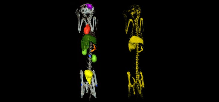 images-spectrales-de-comptage-photonique