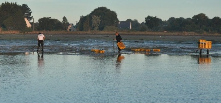 tifenn-yvon-a-locoal-production-d-huitres-de-bretagne