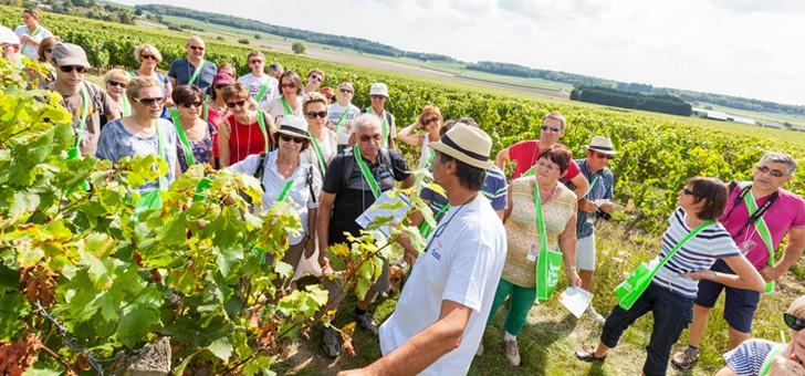 touristes-balade-dans-vignes