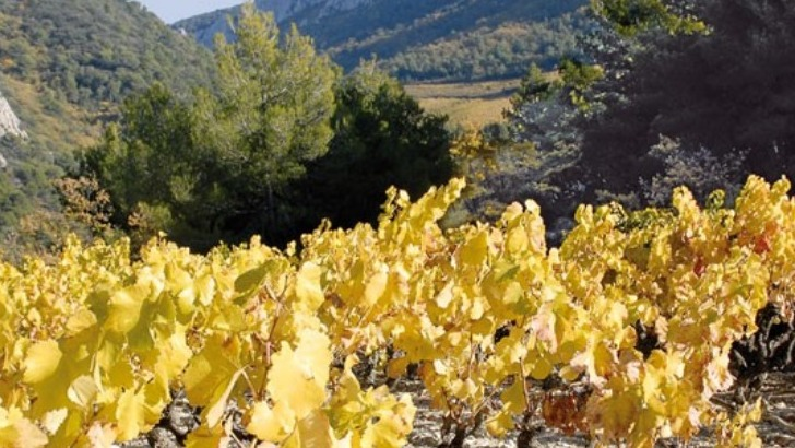 domaine-de-brunely-vins-vacqueyras-sont-issus-de-vignes-surmuris