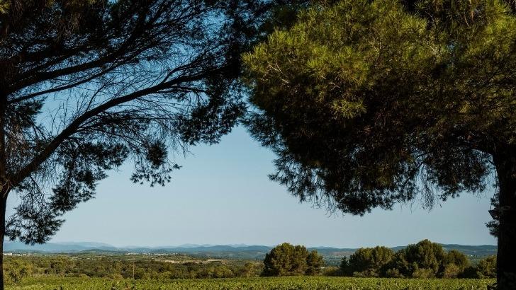paysage-decrit-histoire-des-plus-beaux-vins