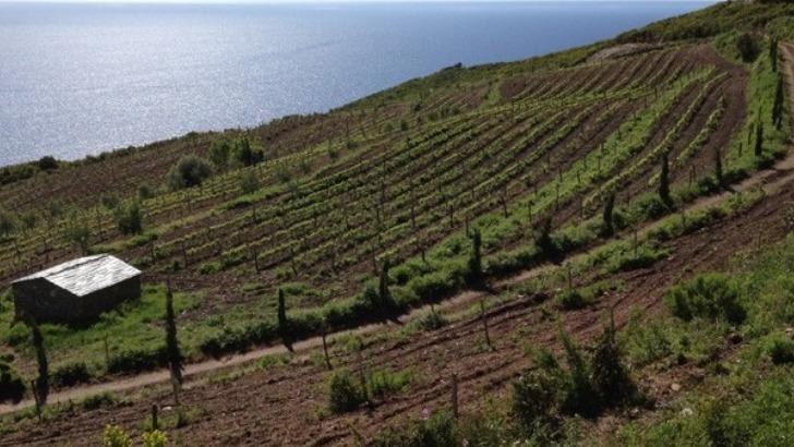 domaine-terra-di-catoni-vins-du-cap-corse