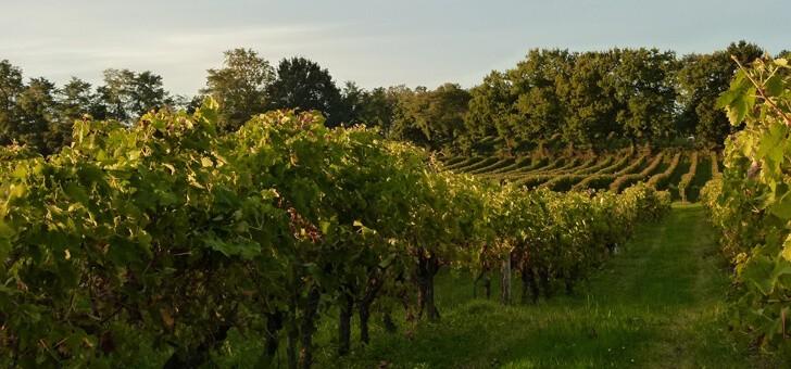 vignes-au-coucher-de-soleil