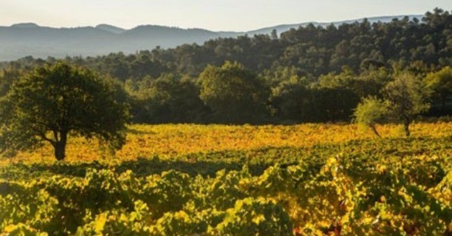 vignerons-independants-du-var-a-brignoles
