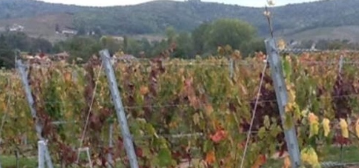 vignoble-du-chateau-de-lacarelle-des-vins-de-garde-exceptionnels
