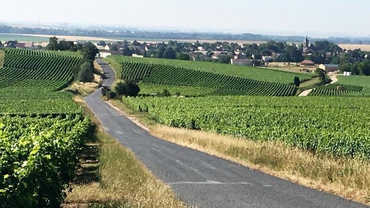 champagne-th-petit-un-vignoble-etend-sur-une-superficie-d-environ-6-ha