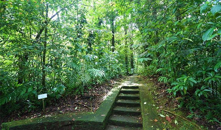 parc-naturel-de-martinique-des-randonnees-dans-une-vegetation-luxuriante