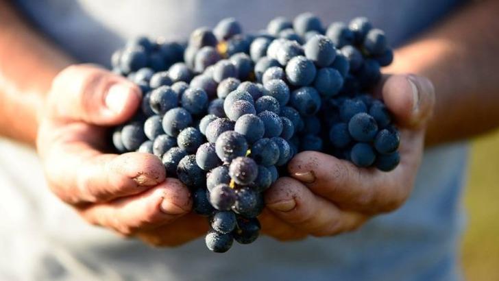 vignobles-gabriel-co-des-demarches-respectueuses-de-environnement-et-de-sante-du-consommateur