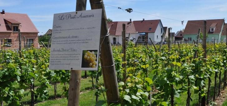 a-decouverte-des-domaines-viticoles