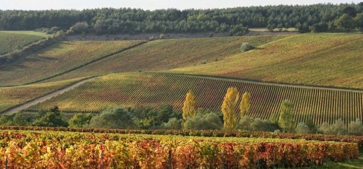 vignoble-etend-sur-5-hectares