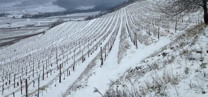 vignes-reposent-durant-hiver