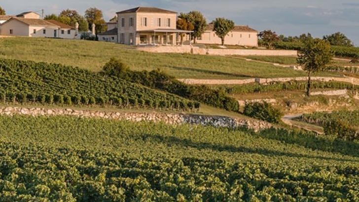vignobles-k-pour-immerger-au-coeur-du-travail-de-vigne