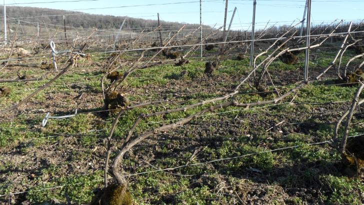 champagne-j-margouillat-des-sols-tres-favorables-a-plantation-des-vignes