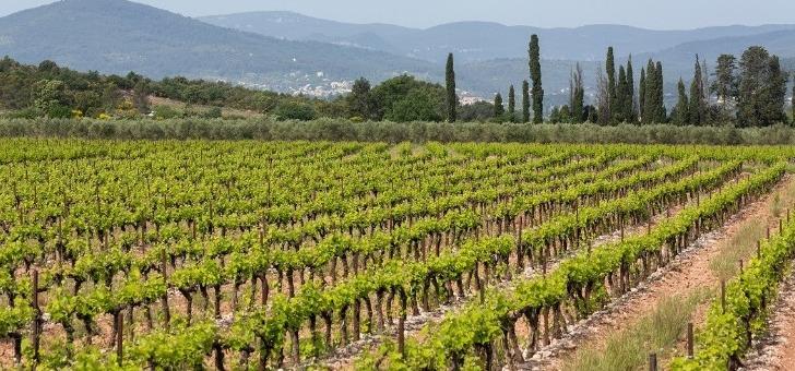chateau-de-aumerade-a-pierrefeu-du-var-domaine-travaille-viticulture-raisonnee