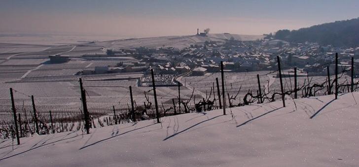 quand-vignes-reposent-hiver