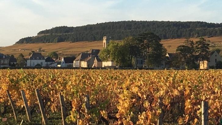 vins-alcools-domaine-domaine-francois-et-sylvie-gerbeaut-a-meursault