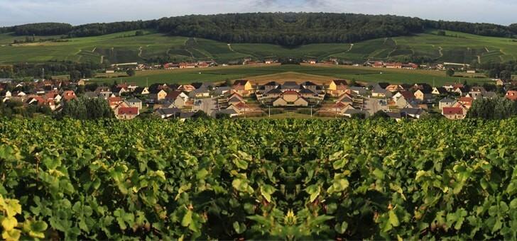 vins-alcools-domaine-champagne-lecomte-pere-et-fils-a-vinay