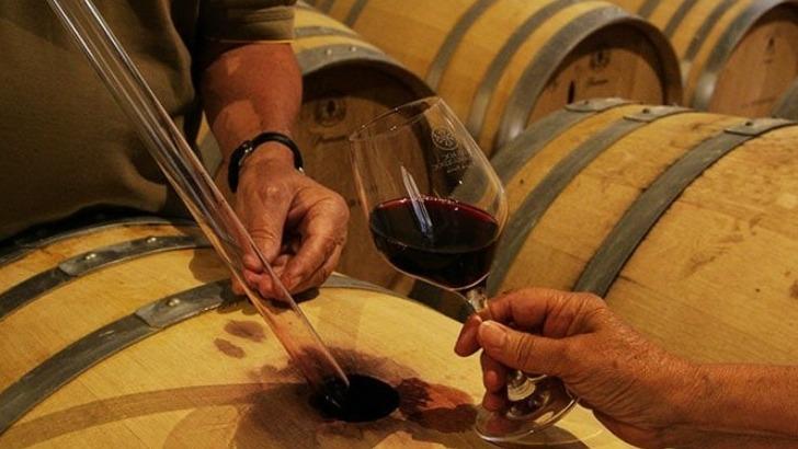 domaine-grange-elabore-ses-vins-a-aide-d-un-savoir-faire-traditionnel-tout-prenant-meilleur-des-innovations-modernes