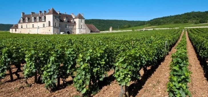 une-region-reputee-pour-sa-richesse-vinicole