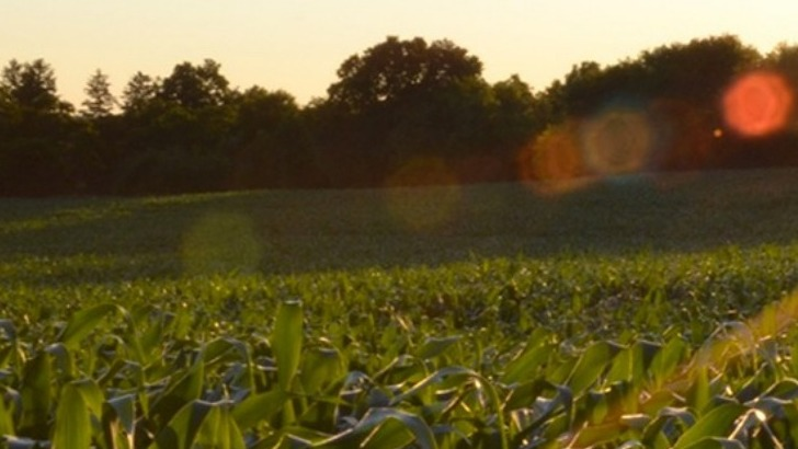 des-produits-biologiques-ecologiques-equitables