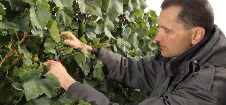 vignes-controlees-avec-rigueur