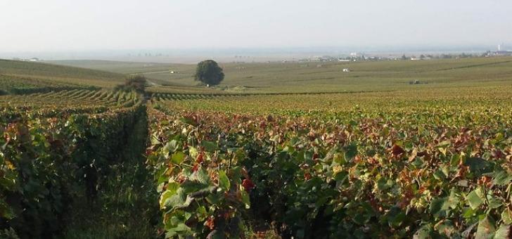 75-de-pinot-noir-et-25-de-chardonnay