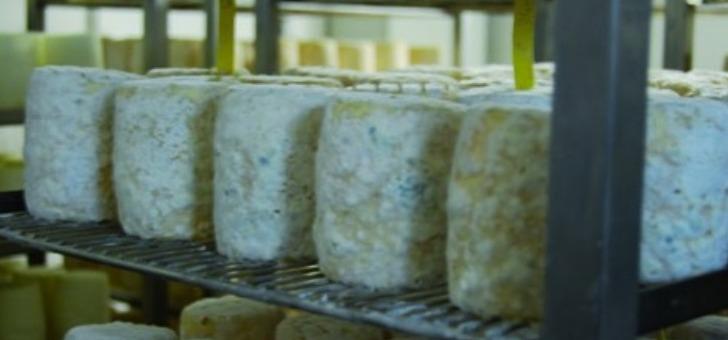 producteurs-et-affineurs-sont-certifies-et-repondent-a-des-normes-d-hygiene-et-de-tracabilite-strictes-c-est-garantie-de-deguster-un-produit-de-tradition-fermiere-toute-securite