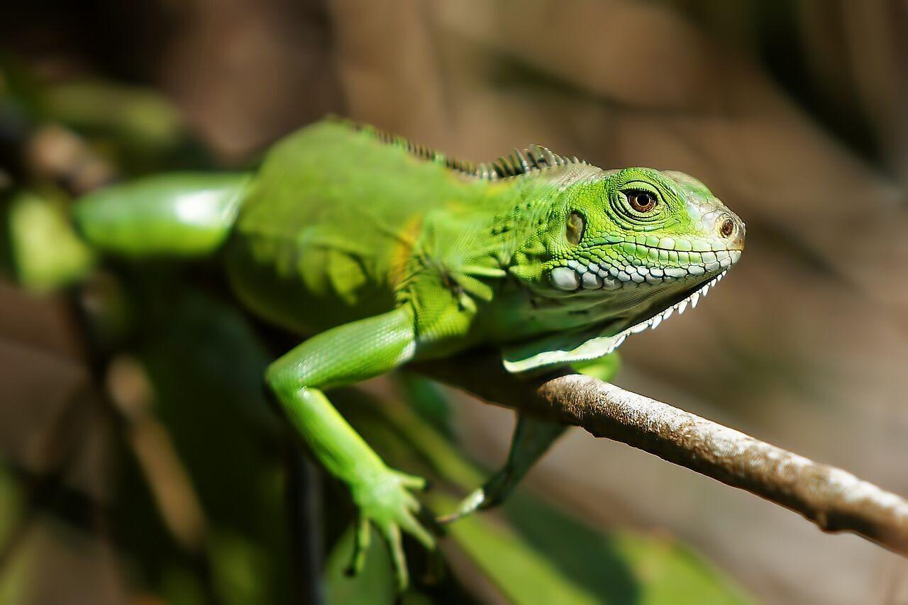 bresil-est-zone-plus-peuplee-d-amphibiens-dans-monde