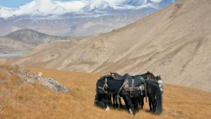 kyrgyz-what-a-bishkek-a-rencontre-d-un-peuple-nomade-et-de-vie-pastorale