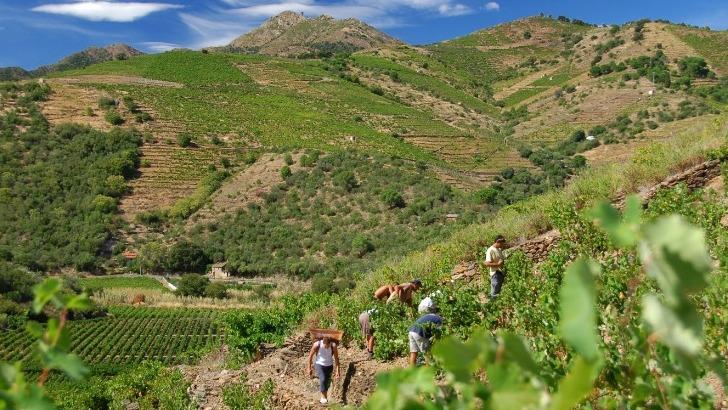terres-des-templiers-regroupe-650-viticulteurs-sur-une-superficie-de-900ha