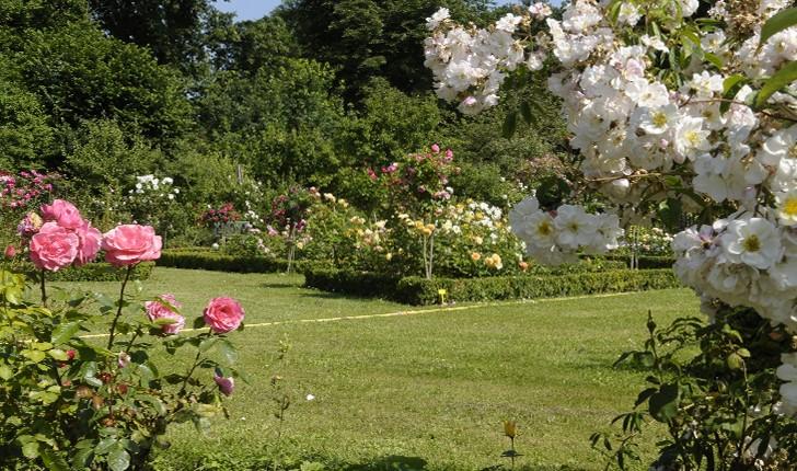 jardin-abbaye-de-vaucelles