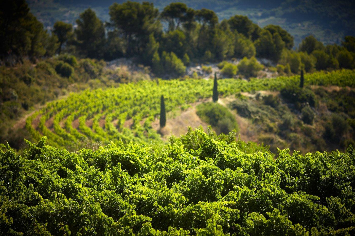 vignes-du-chateau-de-pibarnon-sont-travaillees-de-facon-naturelle