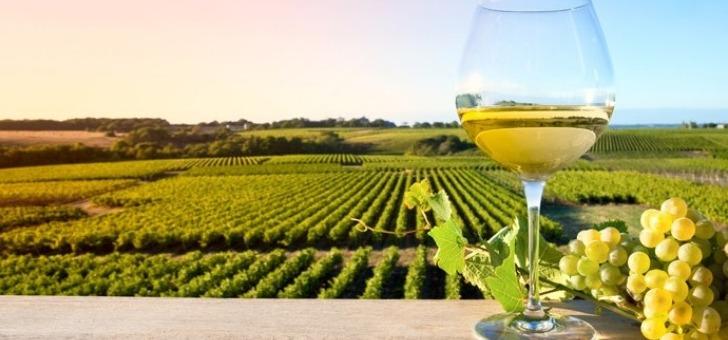 chateau-bourdieu-fonbille-a-monprimblanc-un-domaine-viticole-etend-sur-une-surface-de-27-hectares