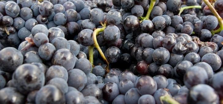 raisins-recoltes