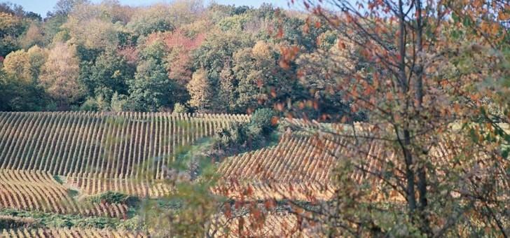 un-vignoble-expose-plein-sud-et-cultive