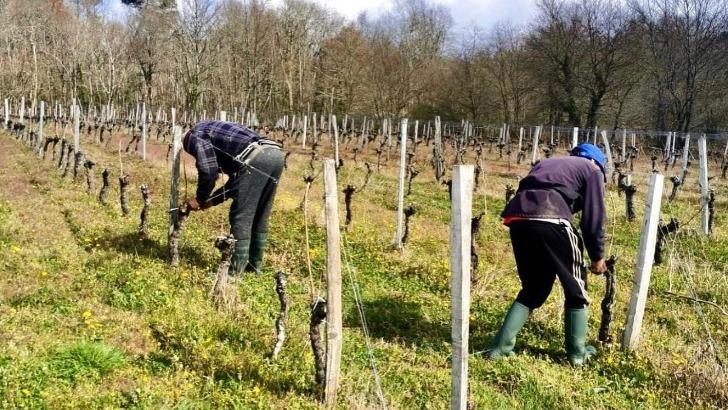 passion-du-terroir-et-harmonie-entre-homme-et-nature-definissent-ame-des-vins-bonabaud