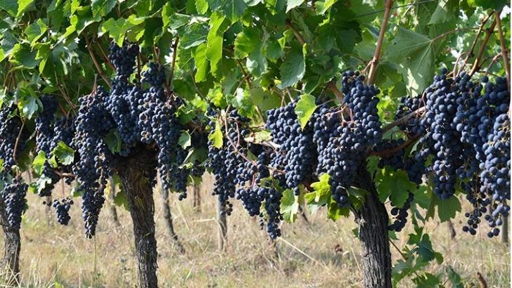 chateau-pre-lande-vigne-epanouit-harmonie-avec-son-environnement-et-donne-meilleur-d-meme