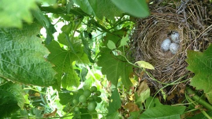 sce-vignobles-jander-des-pratiques-culturales-faveur-de-biodiversite