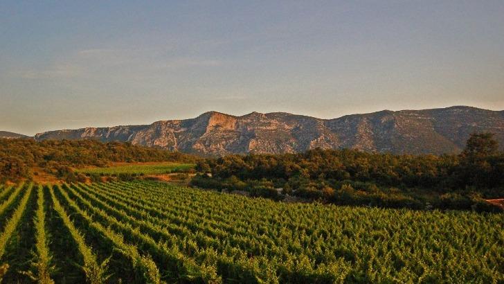 domaine-de-brunet-elabore-des-vins-refletant-terroir