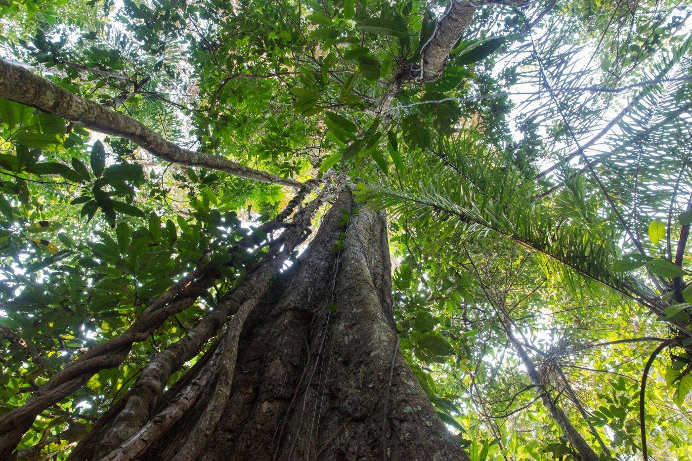 thaki-voyage-partir-aventure-dans-une-foret-amazonienne