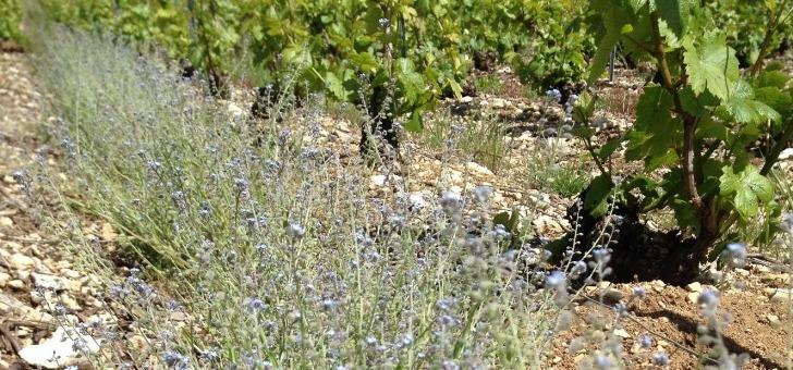 huguenot-tassin-a-sur-ource-une-gamme-de-champagne-hors-pair-issue-d-une-viticulture-raisonnee
