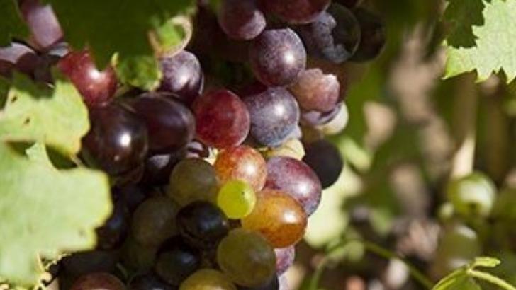 domaine-maravilhas-un-terroir-propice-pour-culture-de-vigne